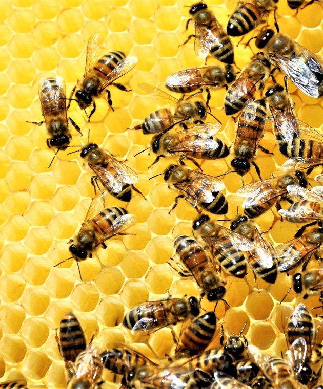 api-manta-real-estate